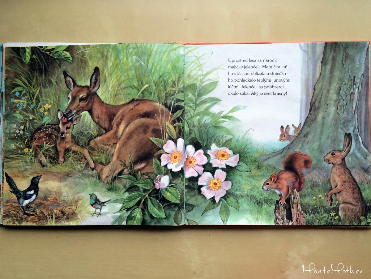 Ako žijú lesné zvieratká 1