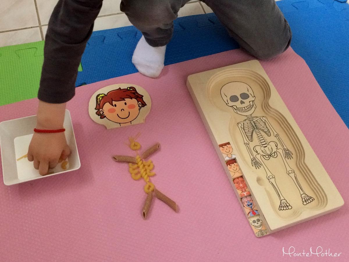 Montessori aktivity ludske telo