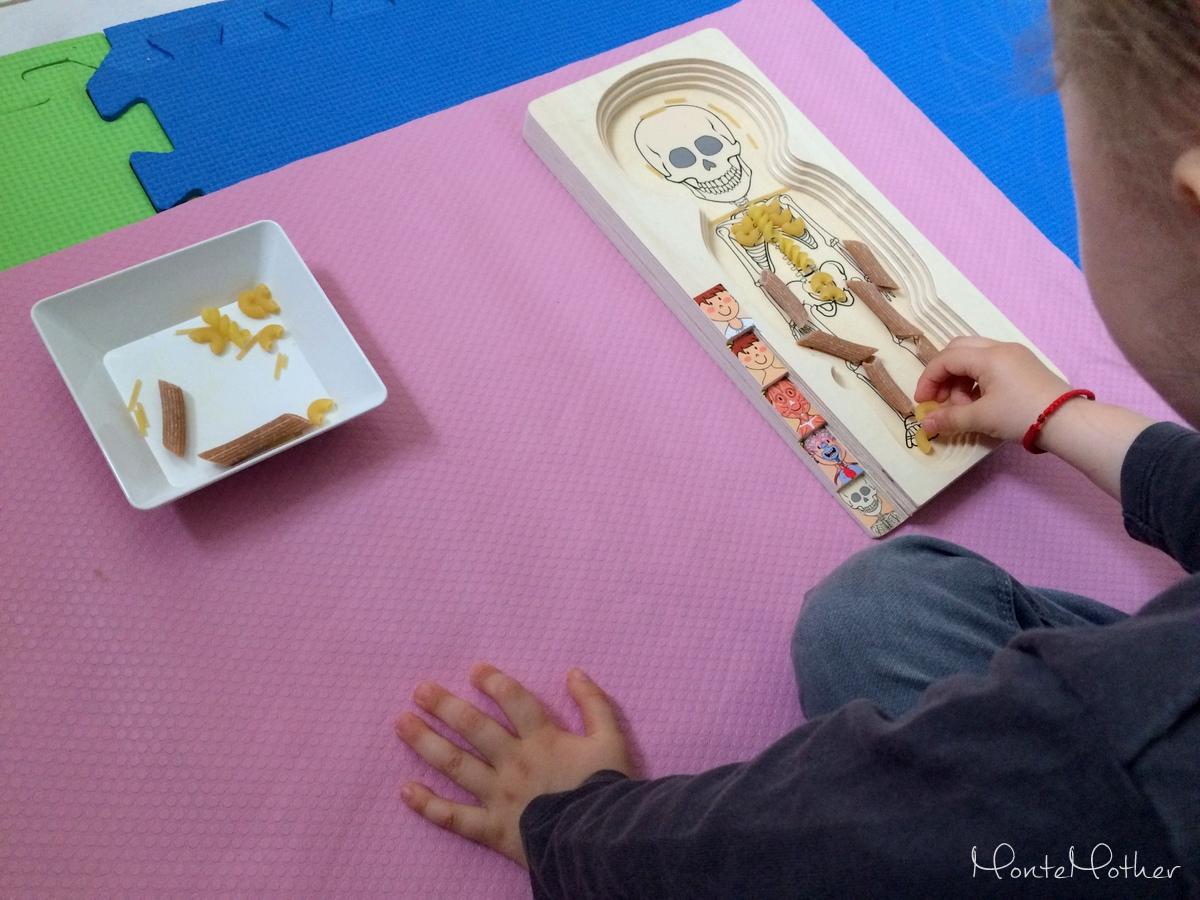 Montessori ludske telo