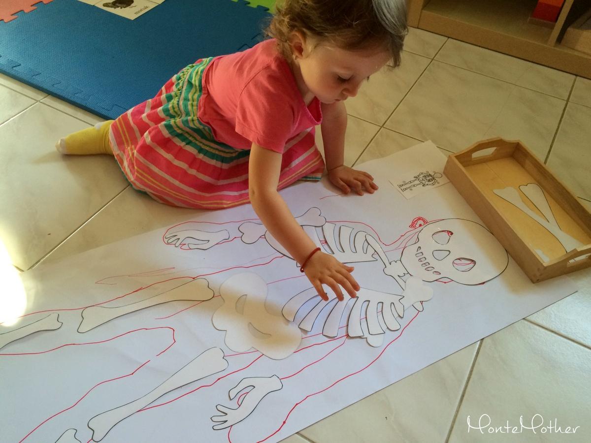 aktivity pre deti ludske telo