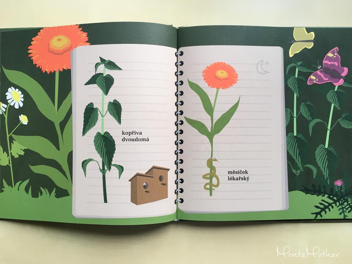 julinka z jedle zahradky