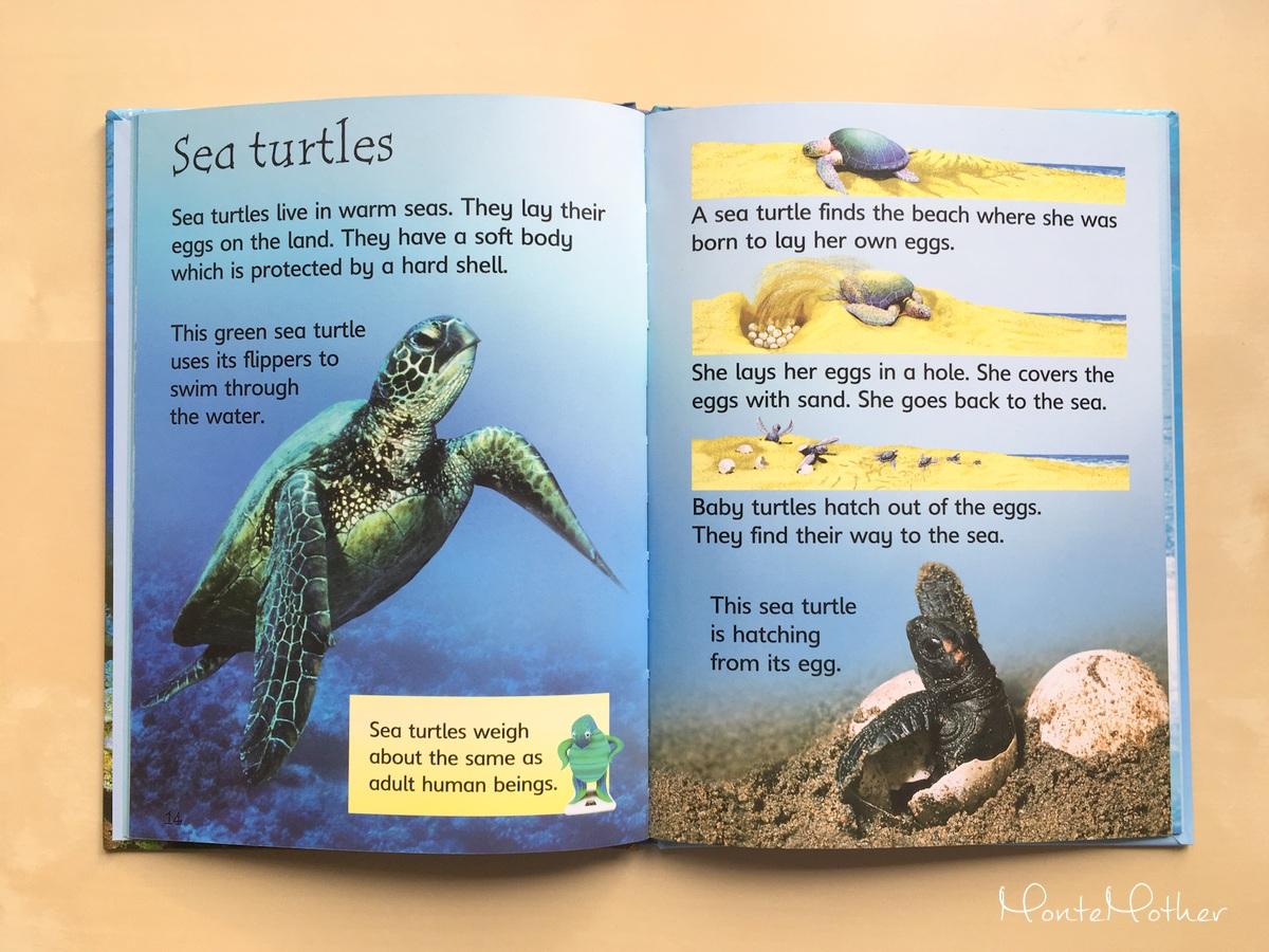 under the sea children book